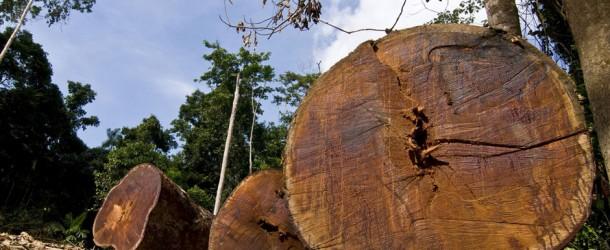 Soutenez le chef Raoni et luttez contre la déforestation en Amazonie
