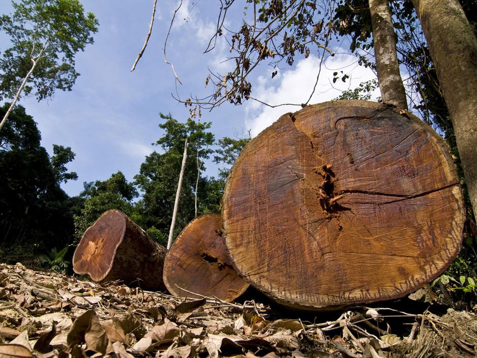 deforestation-en-amazonie_940x705